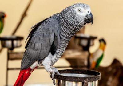 کمبود ویتامین آ در پرندگان