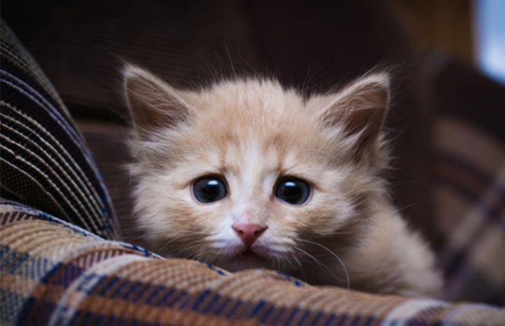 گربه استرسی