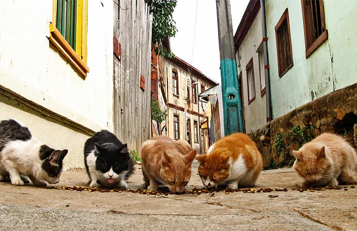 گربه خیابونی
