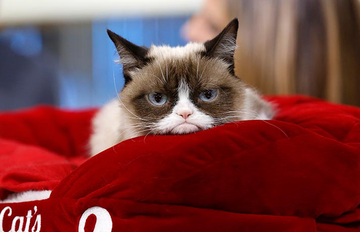 گربه عصبانی