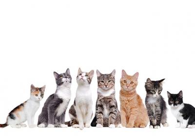 گربه-ها