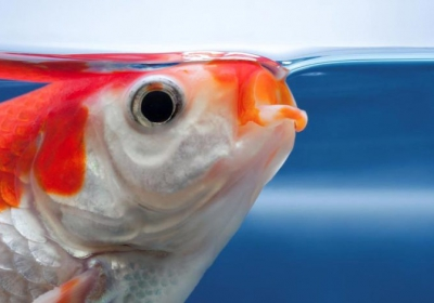 How-Do-Gills-Help-Fish-Breathe-Underwater-780x470