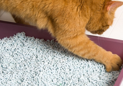 3270083723_hartz_flip_top_cat_litter_pan_purple_side_898x562