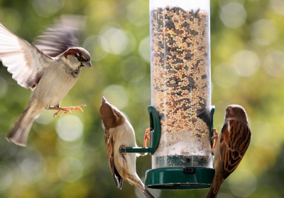 Can-Birds-Eat-Human-Food