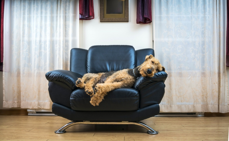 airedale6-scaled