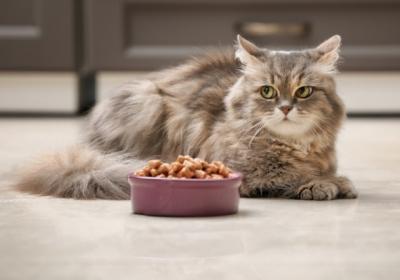 cat-eyeing-food