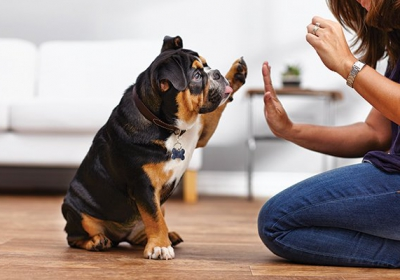 dog-high-five-paw-091718-image-600w-400h-d