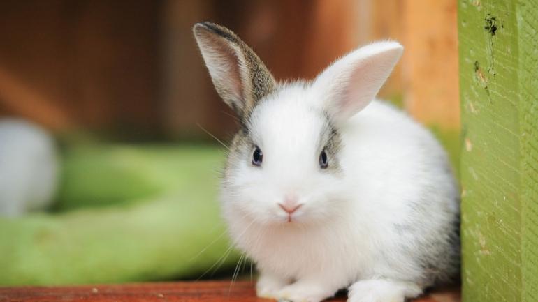 rabbit-475261_0