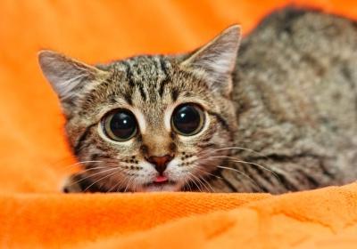 scared-cat-2